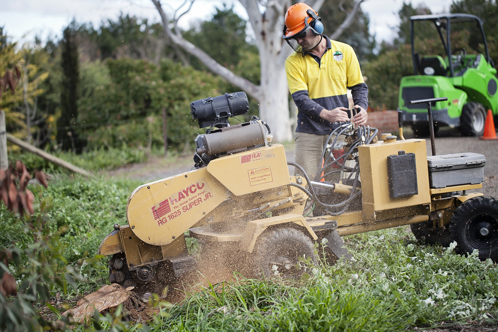 Stump grinding in Canberra